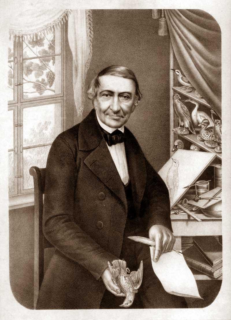 Naumann Johann Friedrich